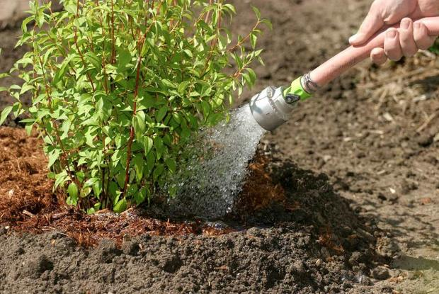 Shrubs Planted Within The Last 2 Seasons Are Considered Newly It Takes Roughly 3 Winters To Elish A Plant